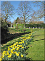 TL4834 : Arkesden: daffodils in mid March by John Sutton
