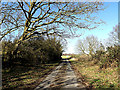 TM3691 : Old Station Lane, Ellingham by Adrian Cable