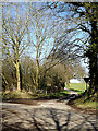 TM3693 : Litchmere Lane, Ellingham by Adrian Cable