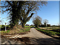 TM3693 : Old Bungay Road, Ellingham by Adrian Cable