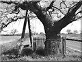 TG1303 : Kett's Oak near Hethersett by Evelyn Simak