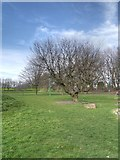SJ8298 : Peel Park, Salford by David Dixon