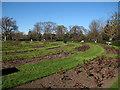 TQ3876 : The rose garden in winter by Stephen Craven