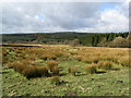SD7557 : A View over Gisburn Forest by Chris Heaton