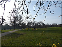 TM1645 : Looking West in Christchurch Park by Hamish Griffin