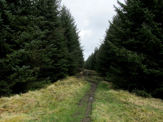A Path in Gisburn Forest