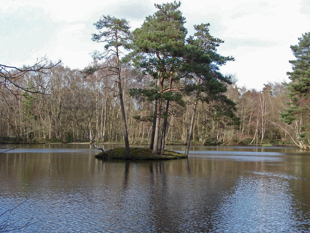 Heath Pond, Simons Wood