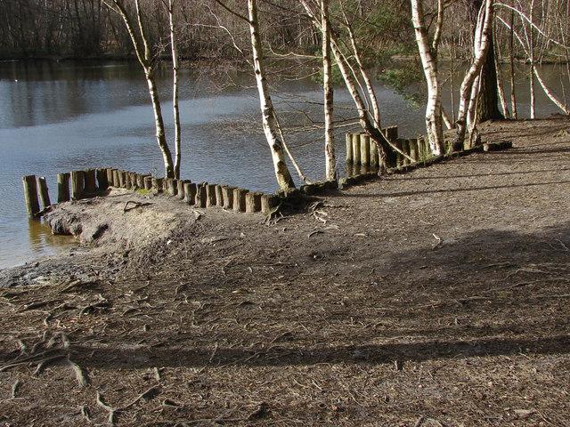 Heath Pond, Simons Wood
