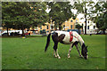 TQ3378 : Piebald horse grazing, Burgess Park by Cobourg Road by Robin Stott