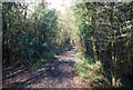 TM1650 : Green Lane in Wrathall's Wood by N Chadwick