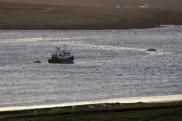 Bringing a dead whale for burial, Snarravoe