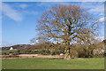TQ2152 : North of Kemps Farm by Ian Capper