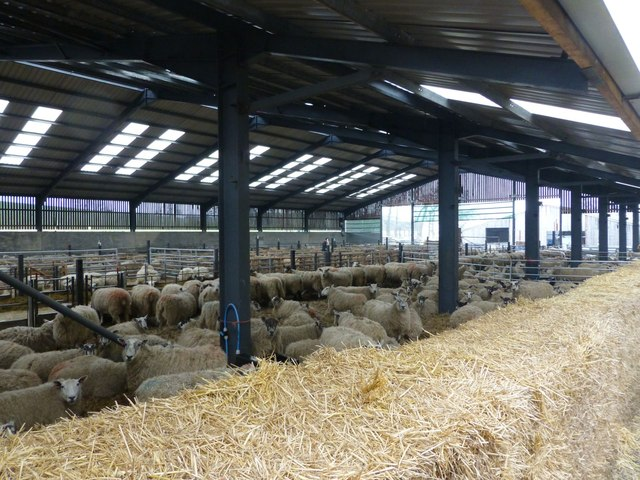 Pre natal ward for ewes