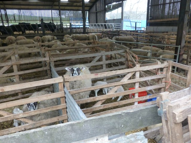 Post natal ward for ewes and their lambs