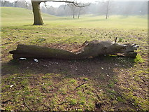 TM1645 : Log in Christchurch Park (close up) by Hamish Griffin