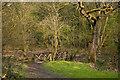 SD5432 : A footbridge in Mason's Wood (The Woodland Trust) by Ian Greig