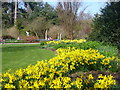 TQ0658 : Wisley - Spring Yellows by Colin Smith