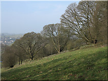 SK2276 : Field north of Eyam by Trevor Littlewood