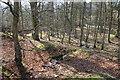 NY9027 : Woodland near Low Force by Bill Boaden
