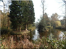 TM1645 : Fir trees in pond in Christchurch Park by Hamish Griffin