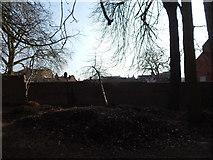TM1644 : Leaf pile in Christchurch Park by Hamish Griffin