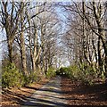 NH5250 : Ord House driveway by Craig Wallace