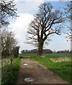 TL1381 : Steeple Gidding: path to Little Gidding by John Sutton