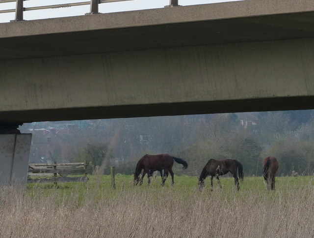 Horses next to the River Soar