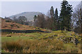 NY3915 : Fellside above Patterdale village by Ian Taylor