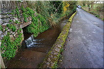 SX8663 : Stream by the side of Love Lane, Marldon by jeff collins