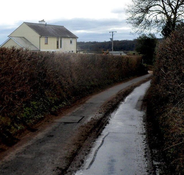 High hedges and a muddy road south of Llanvair Discoed