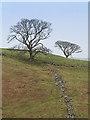 NY6532 : Farmland near Kirkland by William Starkey