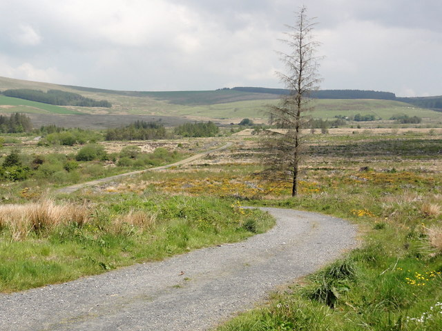 A Cleared Corner of Pantmaenog Forest