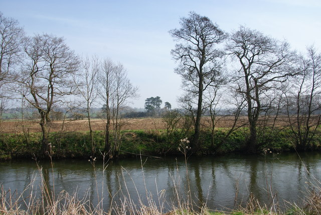 Trees by the River Dove