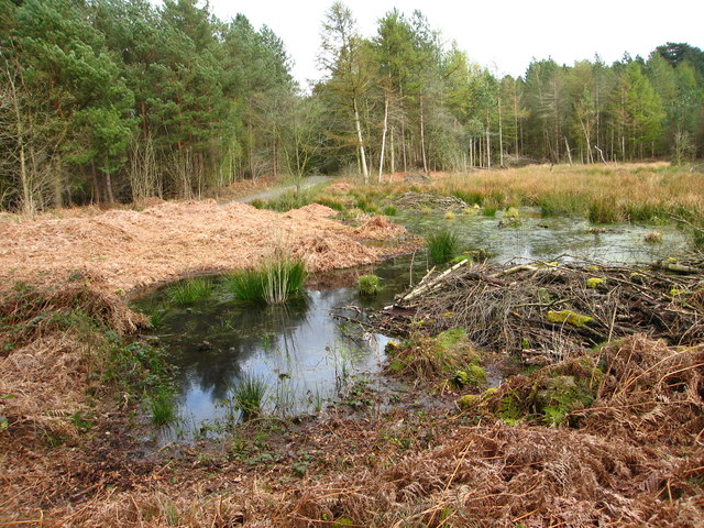 Small open area of wetland in Delamere Forest
