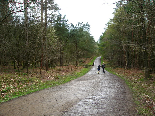 Path in Delamere Forest