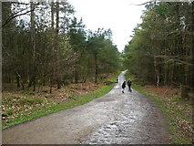 SJ5371 : Path in Delamere Forest by Maggie Cox