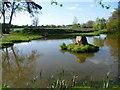 TQ4266 : Oakley Road Pond by Marathon