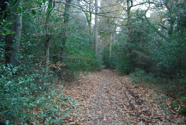 Sussex Border Path, Marley Common