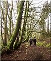 SS9928 : Woodland path, Upton by Derek Harper