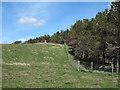 NZ0906 : Western Edge of Crumma Plantation by Trevor Littlewood