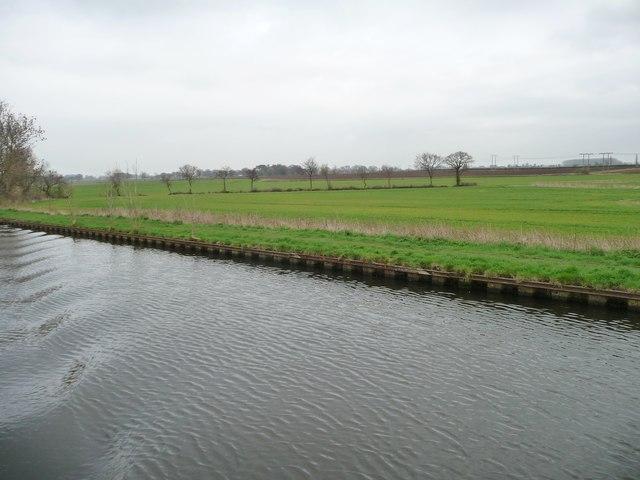 Trees along a drain, east of Northfield Road bridge