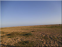 TR0916 : The beach at Dungeness by David Howard
