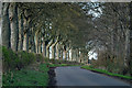 NO2437 : Avenue of trees along a road at Ashley, near Coupar Angus by Mike Pennington