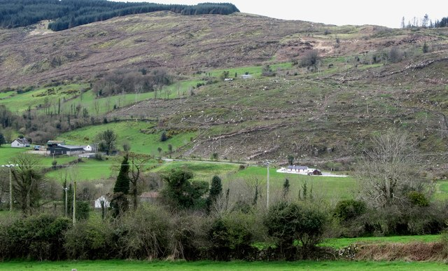 Cut-over forest above the southern end of Camlough lake.