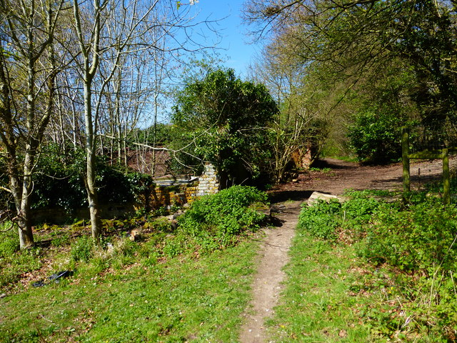 Footpath reaches end of field and enters wood