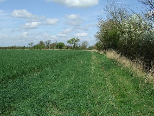 Footpath And Hedge Line