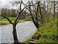 NY2523 : River Derwent by David Dixon