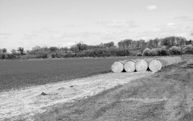 Straw bales in field by Brundish Farm