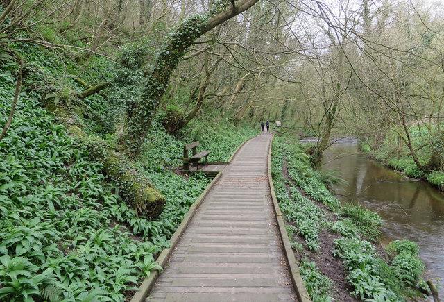 Boardwalk beside the River Derwent